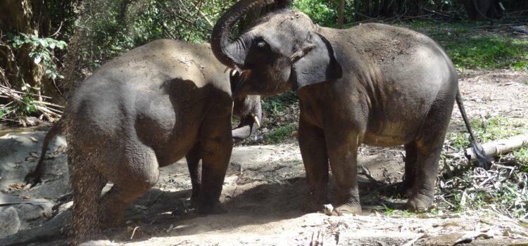 Auf Tuchfühlung bei den Elefanten